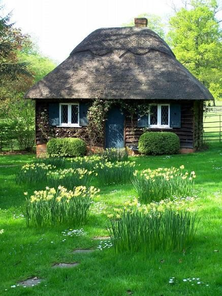 Small Cottage in grassy field with daffodils