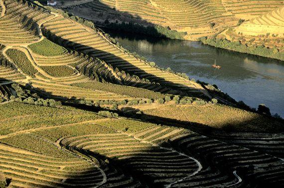 Viñedos en las riberas del Duero, Douro, Douro Valley, Portugal   Corbis