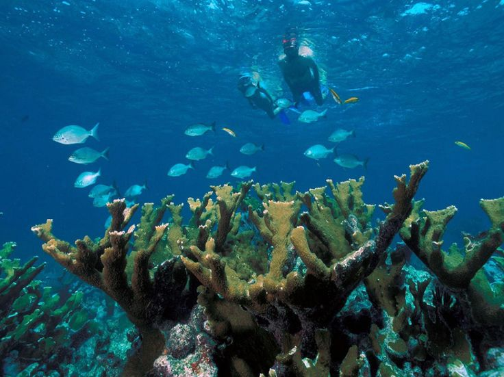 8 Perfect Parks for a Winter Workout >> Snorkel at Biscayne National Park: Biscayn American, Buckets Lists, Biscayn National, Scubas Diving, Florida Keys, National Parks, Biscayn Bays, American National, Coral Reefs