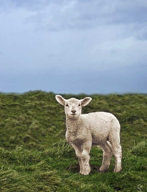 Photoposinglamb by Cath in Dorset, via Flickr