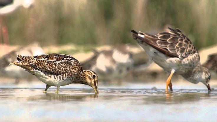Panasonic LUMIX DMC-FZ200 Birds in Wildlife [Hungary]