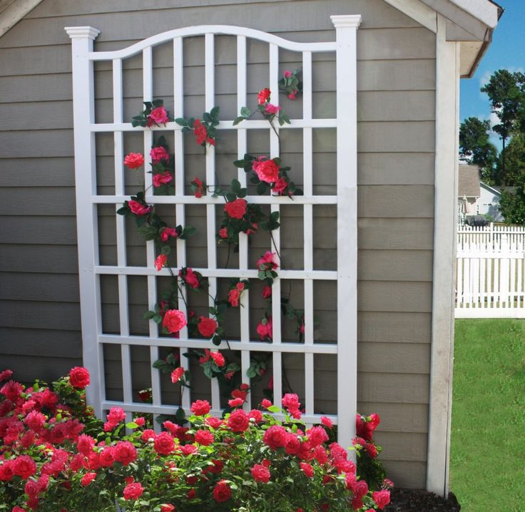 For homes without a large yard or for gardeners who don't have a lot of time to construct or care for a large trellis or arbor, a simple wooden trellis leaning up against the siding can allow your prized roses to make more of a statement to the neighbors.