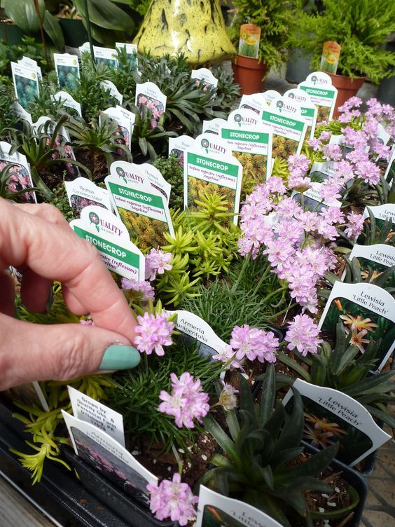 Wonderful Where To Buy Small Plants Part - 13: Miniature Fairy Garden Plants