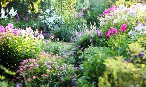 А вот тропинка, тут спирея, флоксы, астильба, манжетка, хризантемы, и котовник с шалфеем.