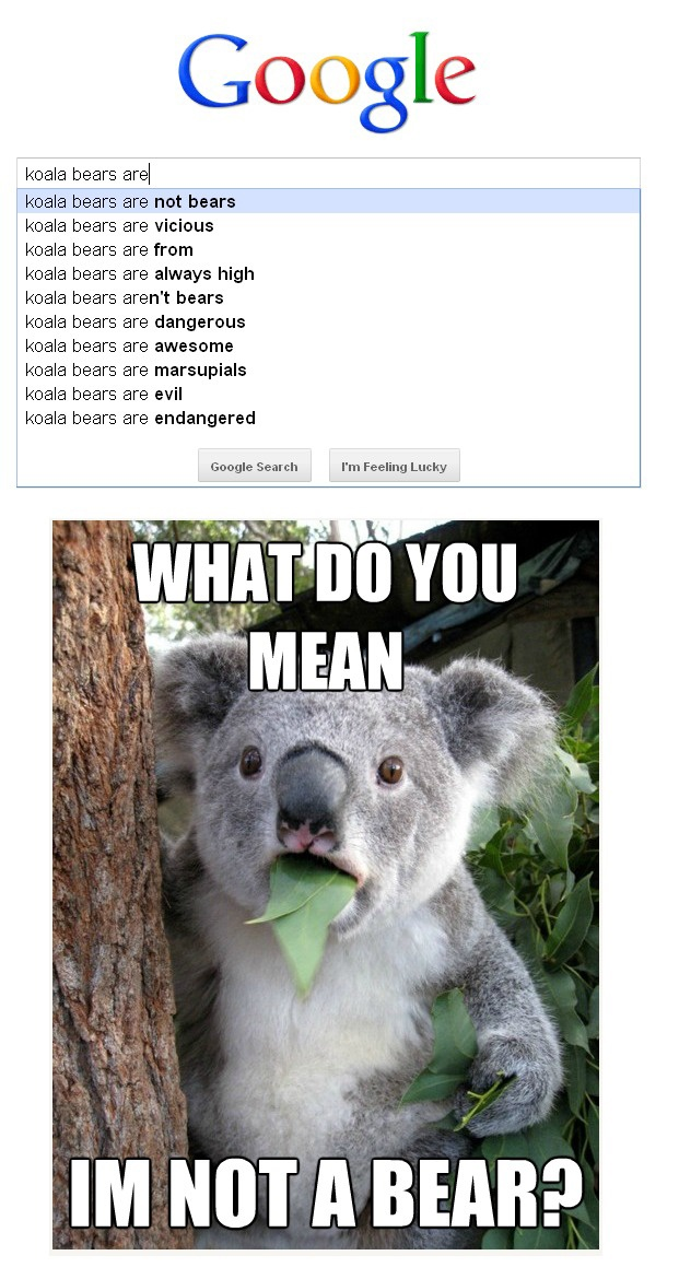 high koala meme - photo #23