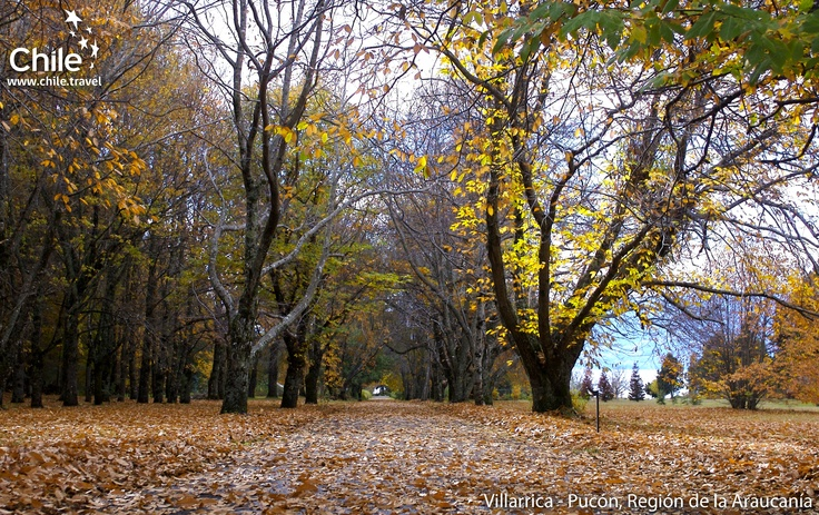 Villarrica - Pucón: A beautiful landscape, full of life and nature in the south of #Chile