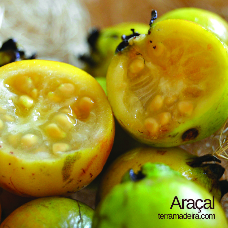 The araçal is a small and round fruit with seeds. It's rich in vitamin C. #terramadeira
