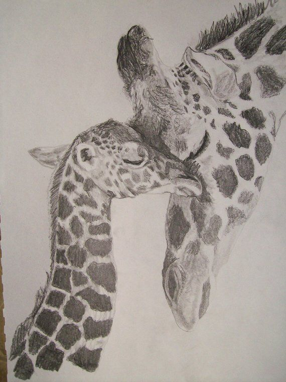 Giraffe Portrait Pencil Sketch 9 X 12 Inch U Provide Picture Etsy Giraffe Drawing Animal Drawings Giraffe Tattoos