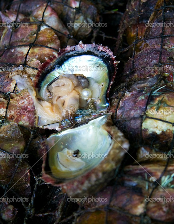 crack open oyster shell and find pearl necklace