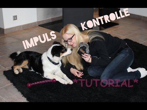 """Impulskontrolle! Wir trainieren mit Mina (Aussie) das Kommando """"Nein/Öhöh"""" // HUNDETRAINING - YouTube"""