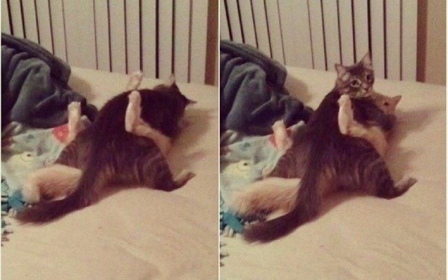20 photos de chats qui mériteraient une bonne explication