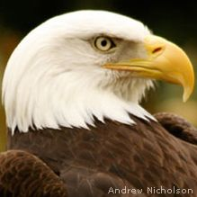 10 Places to see Bald Eagles this Winter