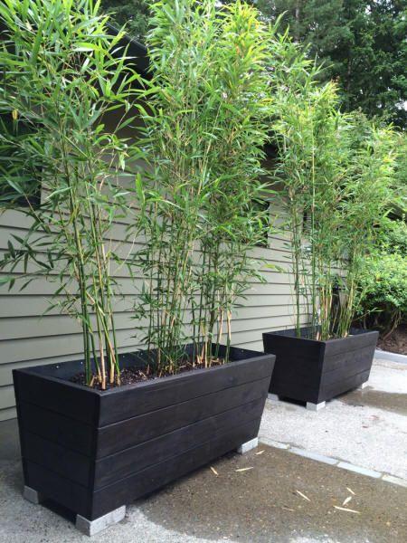 http://www.bamboogarden.com/Cedar planters.htm