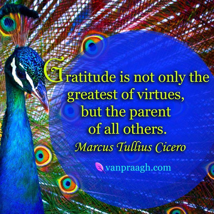 381e9385911bfdd4909278e54a2d1a24--attitude-of-gratitude-gratitude-quotes.jpg