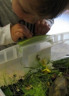 Bring the outside indoors with this classroom snail garden.