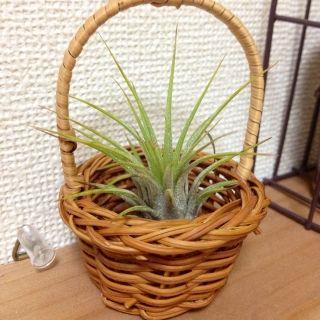 masami's room photo about 植物,ナチュラルキッチン, - RoomClip