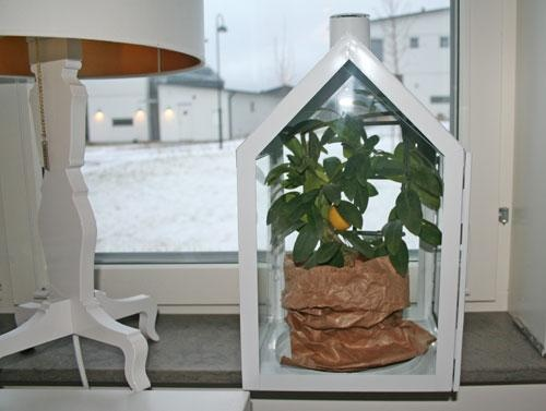 Put your lemontree in a lighthouse! Summer and winter!