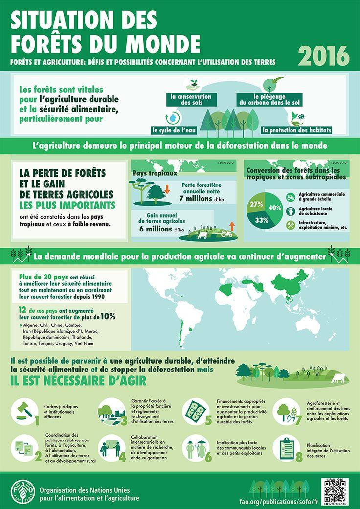 Situation des Forêts du monde 2016