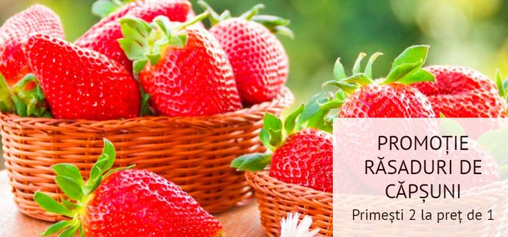 PROMOȚIE RĂSADURI DE CĂPȘUNI! Au mai rămas doar 5 zile în care comanzi căpșuni și primești 2 la preț de 1!!! Comandă aici: https://gradinamax.ro/promotii/saptamana-capsunilor-2-la-pret-de-1!