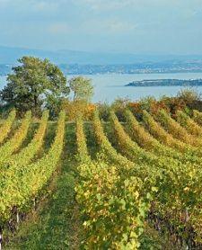 #Territorio #Valtenesi, #Moniga #lagodiGarda #vinitaly2014 #prodottitipici #vino #eccellenze @Lago Di Garda Lombardia