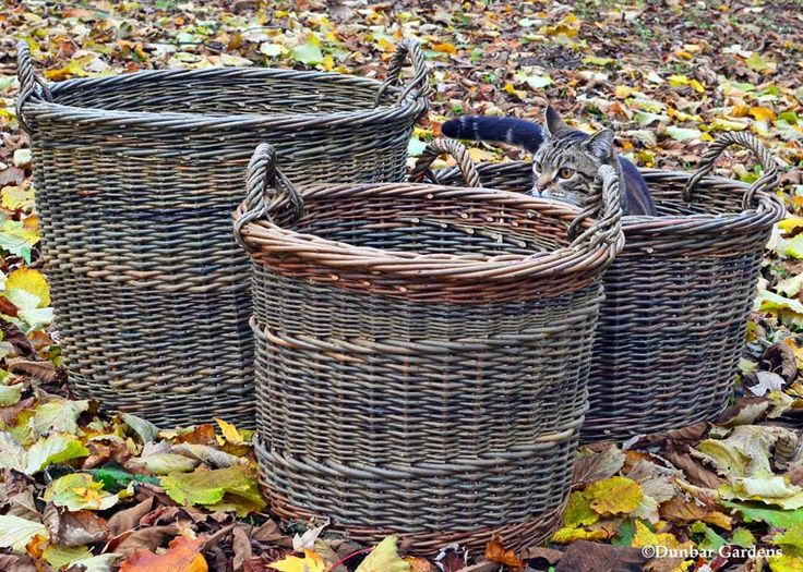 Basket Weaving With Willow Branches : Best images about wire metal wood wicker on