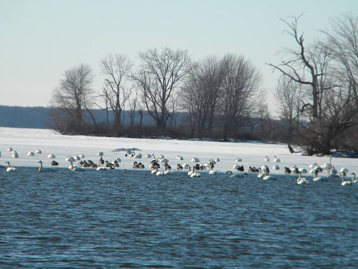 Cold weather does not bring an end to enjoying pymatuning for Fishing in cold weather