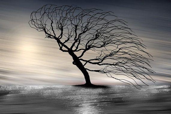 LARGE SURREAL TREE Fine Art on Canvas Photography by GrayArtus  http://www.grayartus.com/#!gray-artus-original-paintings-for-sale-/c10i7