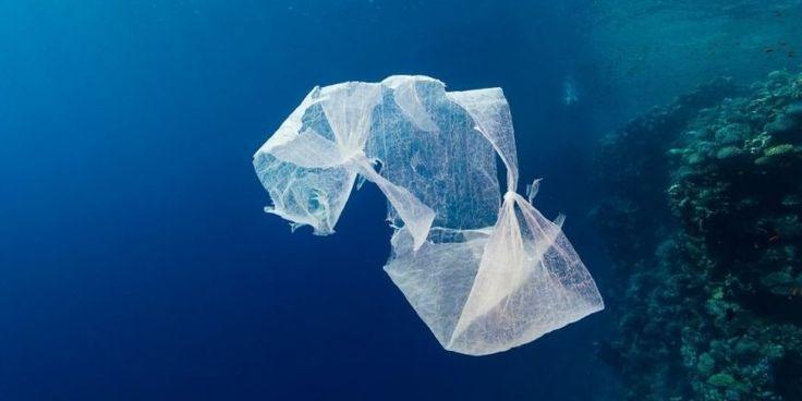 Le sac plastique fin devrait disparaître des supermarchés en 2016