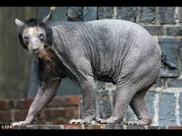 real weird animals found - Google Search