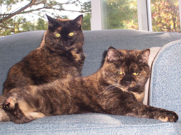 Photo-Ingrid King. The one in back looks like my beautiful tortie who I lost last year. RIP sweet baby