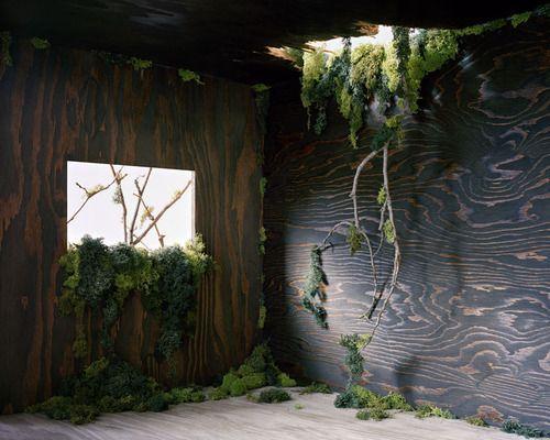 piante cascanti parete legno