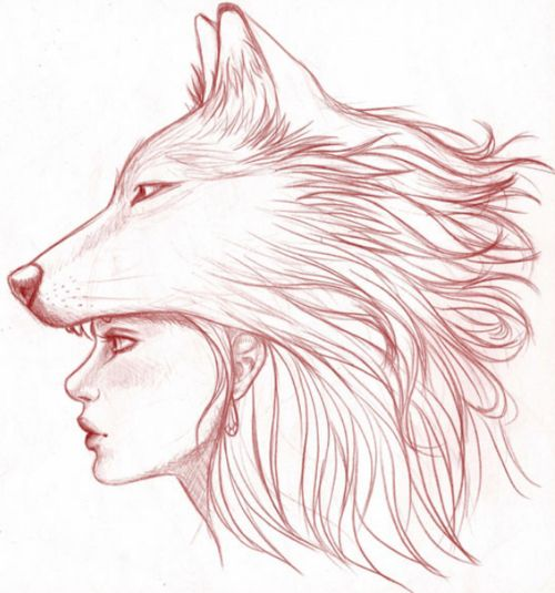 best 25 wolf drawings ideas on pinterest awesome