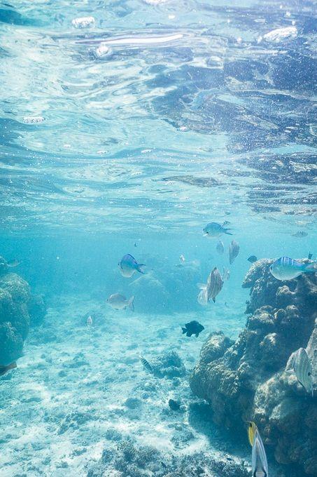 """solem-lumen: """"Coral reef lagoon of Yoshino Beach, Miyako Island """""""