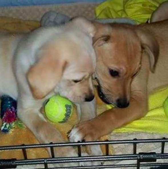 Dog Best Friends Adopted Together As Puppies Still Can't Stand To Be Apart