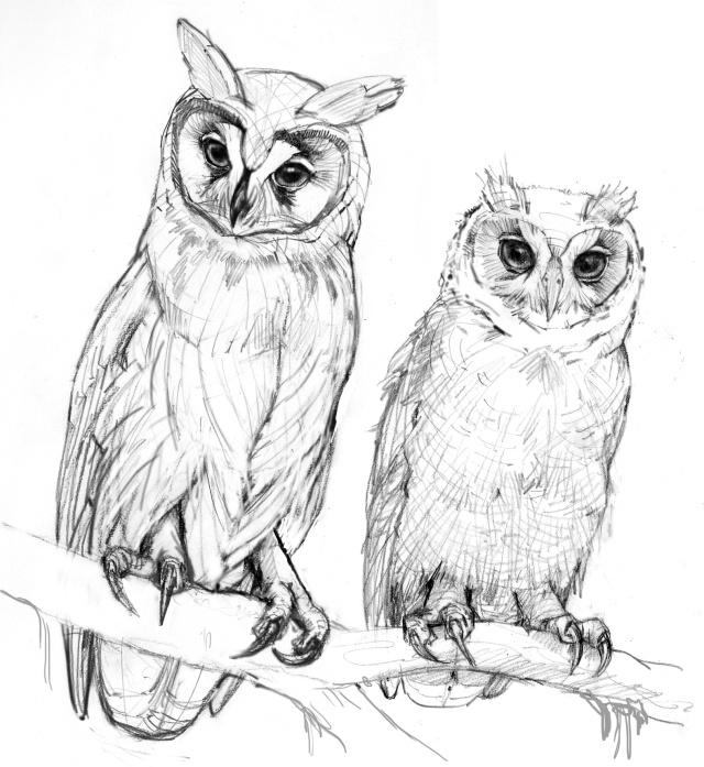 Best 25 cartoon birds ideas on pinterest cartoon bird for Cartoon owl sketch