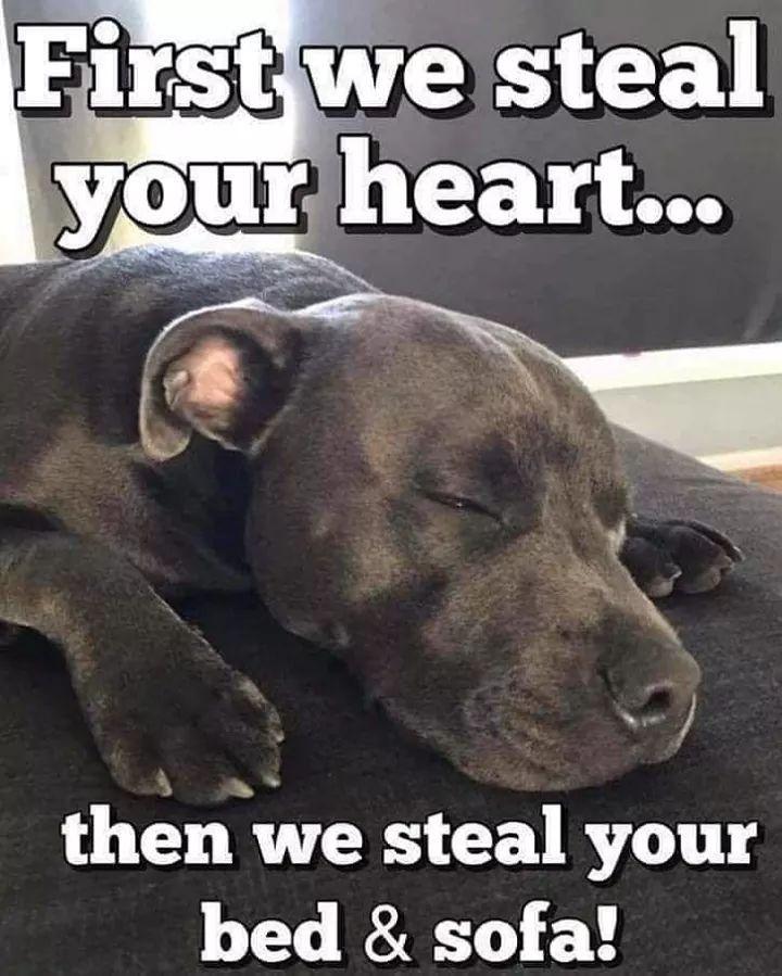 So True Dog Quotes Pitbull Puppies Pitbull Dog
