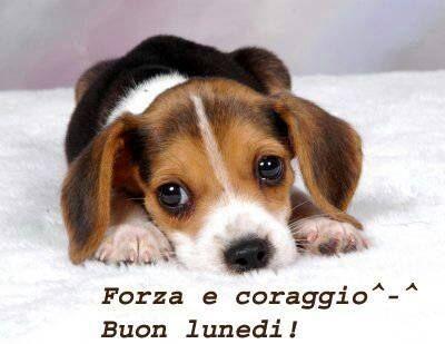 Grognards: BUON LUNEDì    www.emule.it
