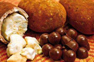 """Cajá - Fruto do cajazeiro, também é conhecido por taperebá ou cajá-mirim. Parente do cacau, pois apresenta castanha semelhante. Seu tamanho é pequeno, semelhante a uma ameixa, sua casca é de um tom de amarelo, pendendo para o ouro. Fruto de muita acidez é encontrado """"in natura"""" e pode ser utilizado para a produção de sorvetes, sucos, compotas e geleias. Ainda podemos fazer um delicioso licor, muito consumido na Amazônia."""