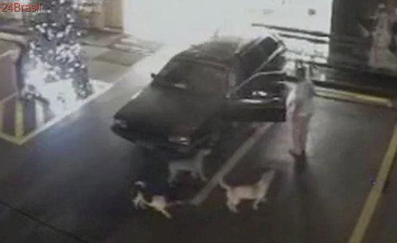 'Nunca atacaram', diz tutor de cães agredidos em posto de combustível