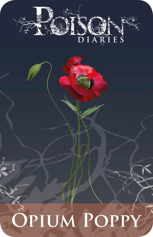 Poisonous Plants:  Opium Poppy.