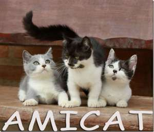 Mini+Gato+para+Venda+Toy+Cat+Gatos+Patas+Curtas+Venda+de+Filhotes+mini-gatinhos+Importados+pedigree+IPC+Certification
