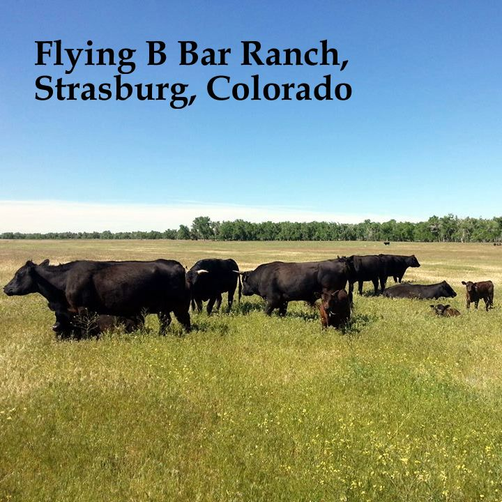Grass Fed Beef For Tallow Balm Meet Flying B Bar Ranch Our New And Abundant Source Of Amazing 100 Grass The Balm Chemical Free Skin Care Natural Skin Care