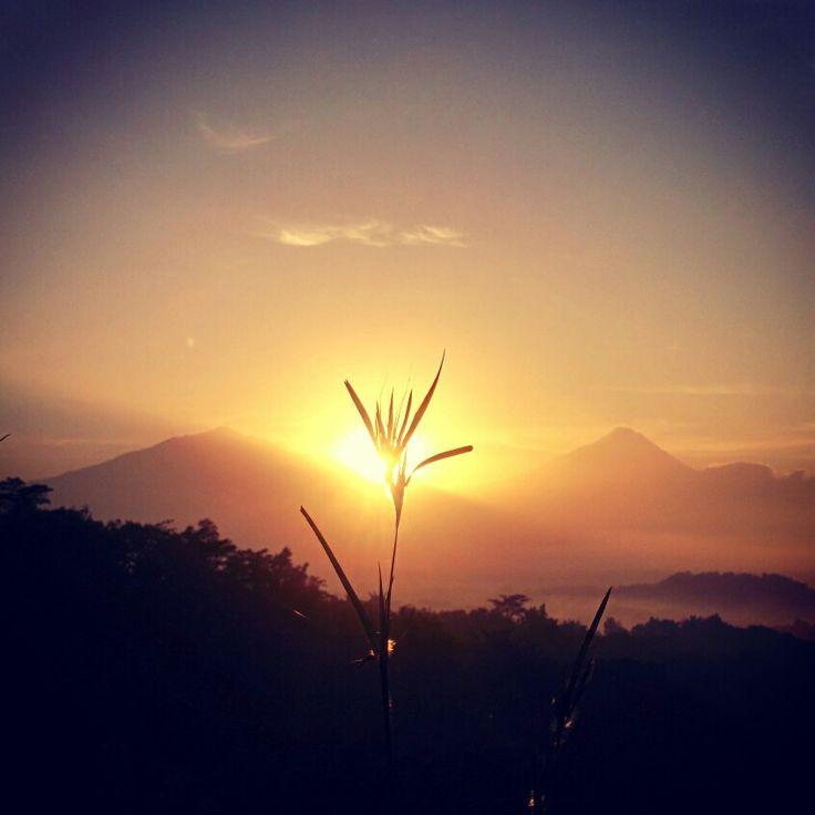 Flower on the sunrise #tumphuksetumbuh #magelang #yogyakarta #wisataalam #gerilyajogja #ExploreJogja #jelajahjogja #backpackerjogja #backpacker #traveling #trip #adventure #vacation #tamasyajogja #tamasya #backpackerbangil #lensakeindahan
