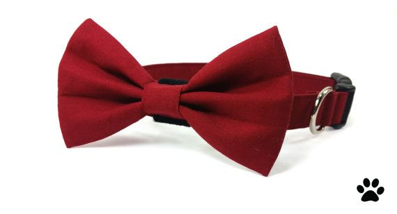Hey, I found this really awesome Etsy listing at https://www.etsy.com/ca/listing/227366302/burgundy-wine-red-bow-tie-and-collar-cat