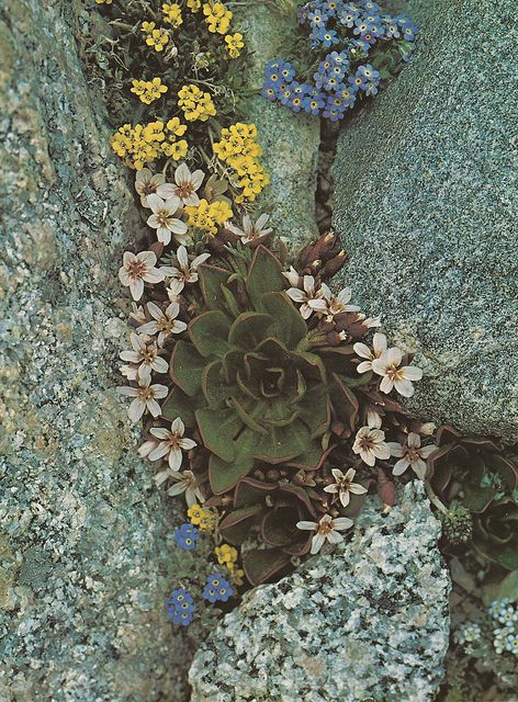 plant succulents between rocks
