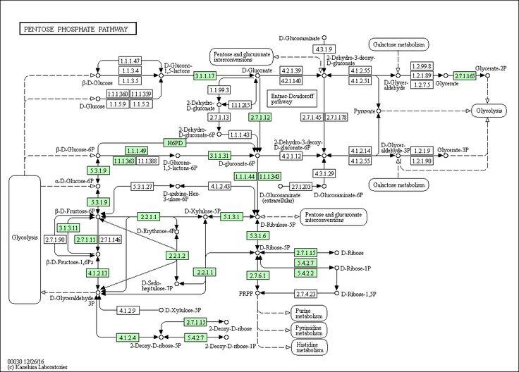 KEGG PATHWAY: Pentose phosphate pathway - Mus musculus (mouse)