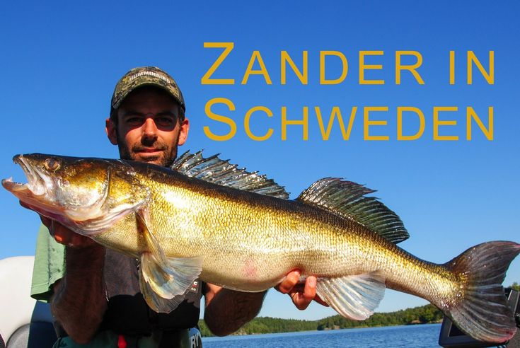 Zander & Hecht Angeln in Schweden - Zander, Gös & Pike Fishing in Sweden
