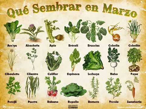 Qué sembrar en marzo en el hemisferio sur.