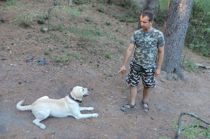 Дрессировка собак  в Ялте  Ялта  Дрессировка собак  в Ялте Наша Дрессировка - это процесс установления нормальных рабочих взаимоотношений между собакой и хозяином. В процессе занятий мы учим хозяина правильно и вовремя поощрять собаку, вовремя одергивать ее и предотвращать нежелательные поступки. Однозначно дрессировать можно и нужно всех собак, и с самого раннего возраста. Задача рассказать и показать, как добиться доверия собаки. Только когда ваша собака выполняет команды быстро и с…