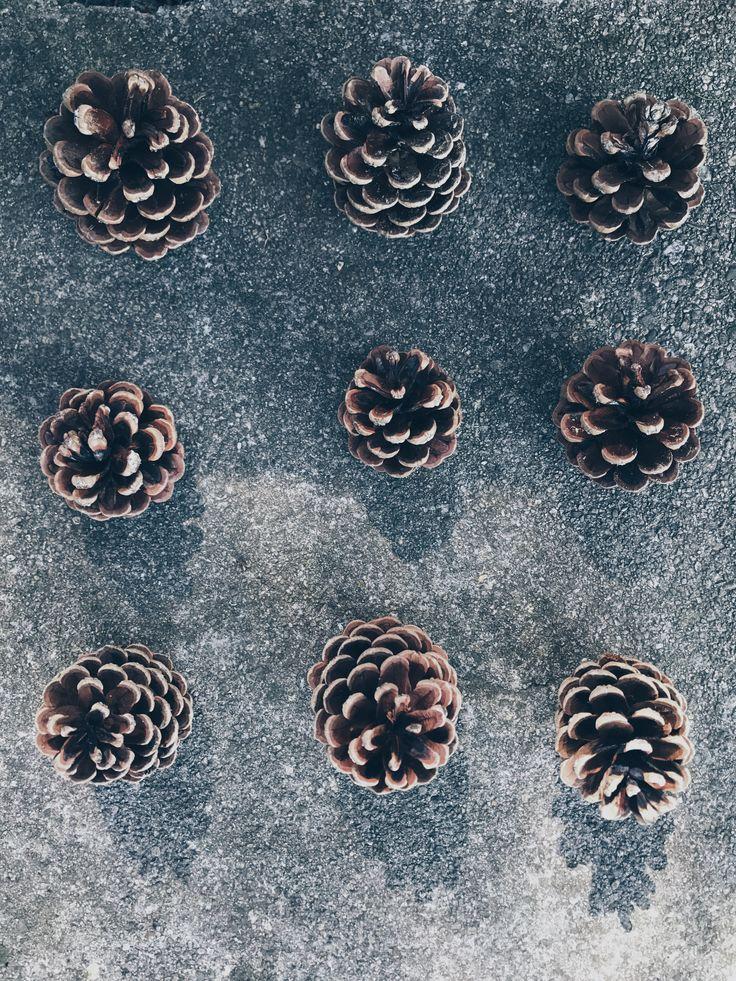 Oggi tra i #monti #scarabocchidicasa #home #myhome #homedesign #mountains #montagne #inmontagna #pigne #pinecone #pigna #stilllife #stilllifephotography #suimonti #concrete #nature #wood #iphone7plus #iphonecamera #vsco #vscocam #vscoitaly #vscocamitalia